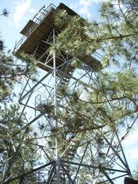 halsey tower
